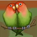 perroquets tendresse