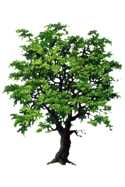 Tubes feuilles et arbres
