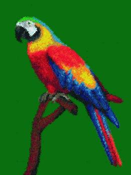 Perroquet color - Perroquet en dessin ...