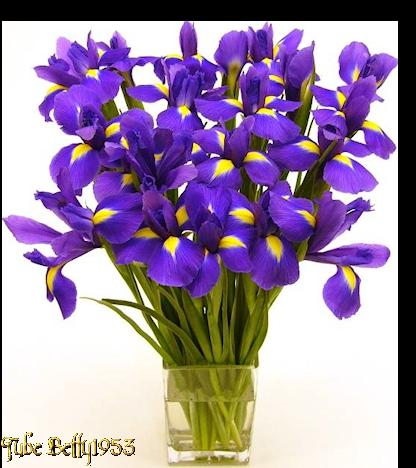 vase de lys mauves